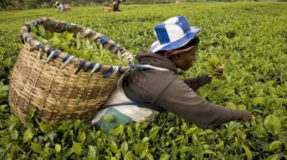 Thema Landwirtschaft Agriculture