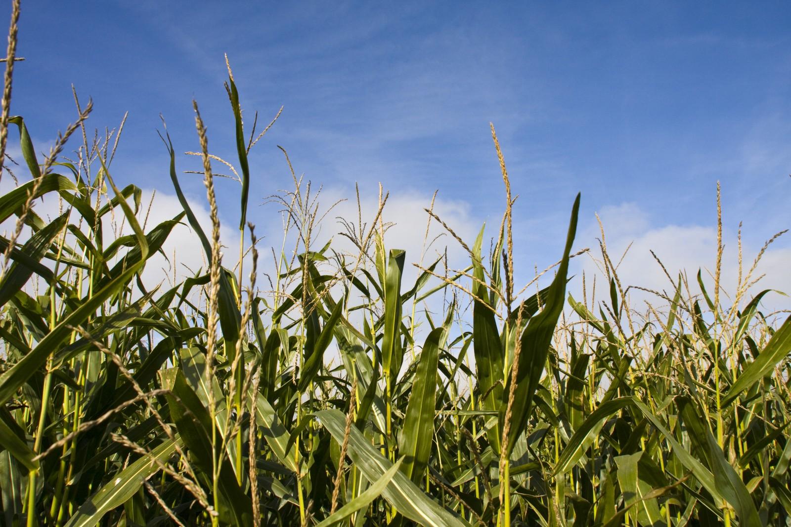 Agrotreibstoffe